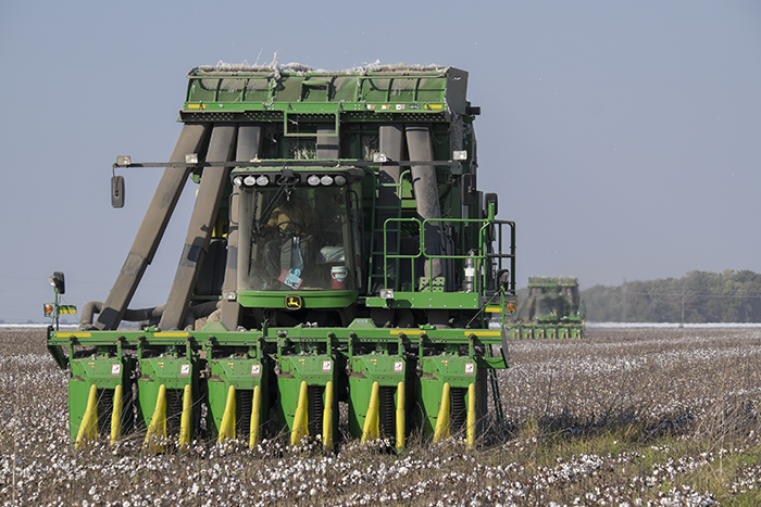 Harvesting Cotton 2