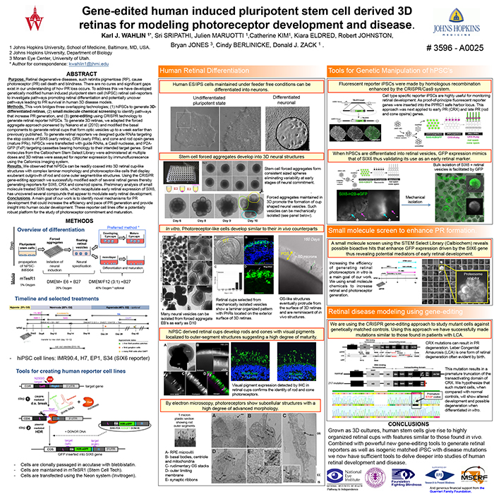Gene-Edited Human Induced Pluripotent Stem Cell Derived 3D ...