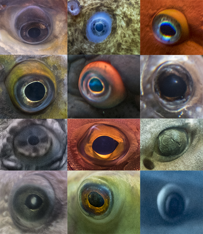 Eyes At The Shedd