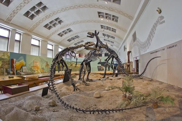 Utah Museum Of Natural History University Of Utah