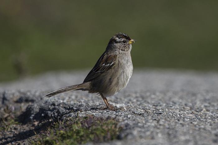 Littlest bird
