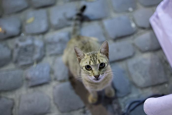 Feline accord