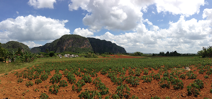 Vinales plantation