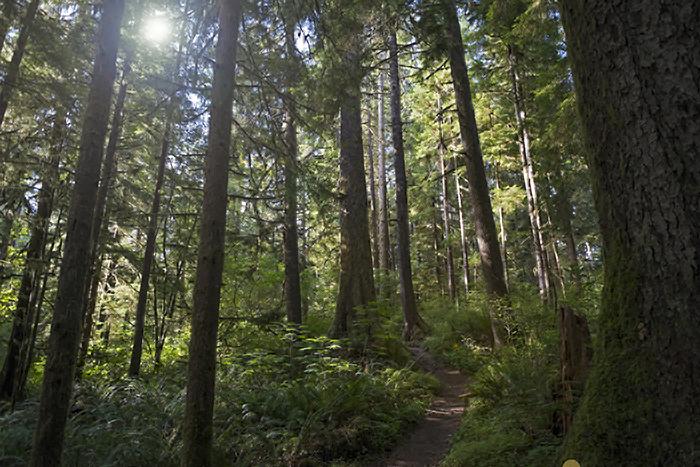 Forest walk_M