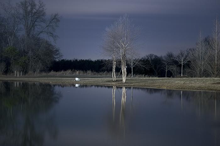 Janelia Farm trees_