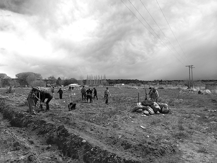 Planting a farm