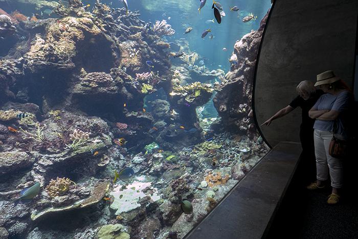 SF Aquarium