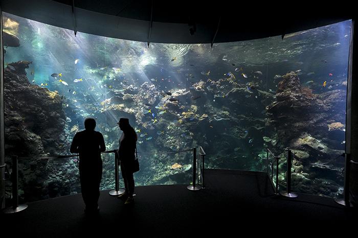 SF Aquarium2