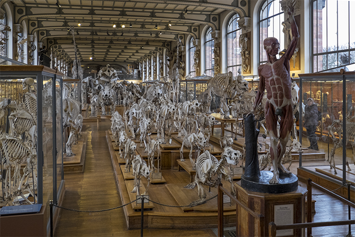 Entrance museum of comparative anatomy