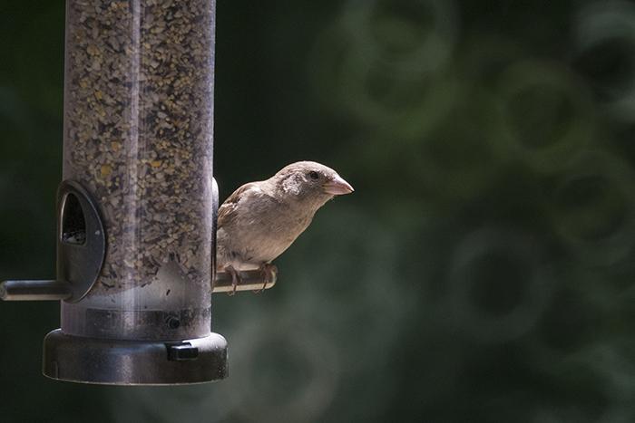 Bird bokeh 3