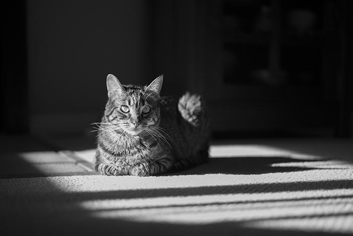 Poppy in sun