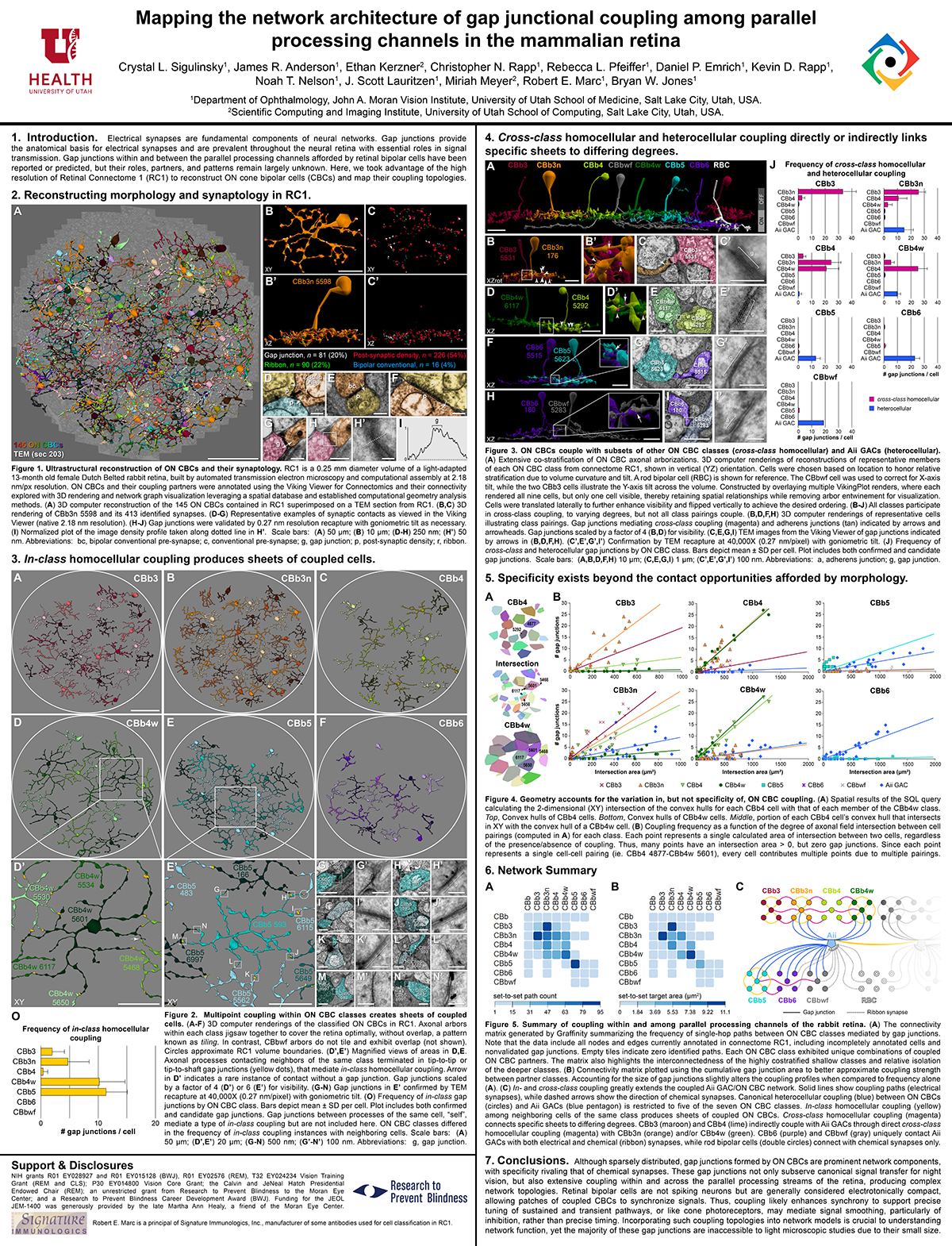Mapping The Network Architecture of Gap Junctional Coupling